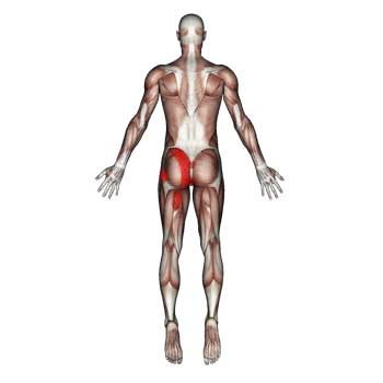 Gluteus Maximus Muscle: Low Back, Hip, Tailbone, Buttock Pain