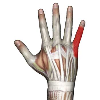 Abductor Digiti Minimi Hand Muscle: Hand Finger Pain