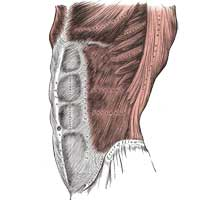 Abdominal and Low Back