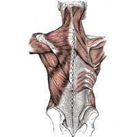 Cervical Thoracic Lumbar