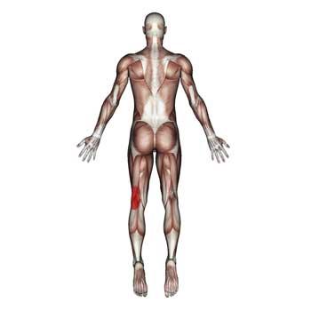 Biceps Femoris Muscle: Knee, Thigh Pain