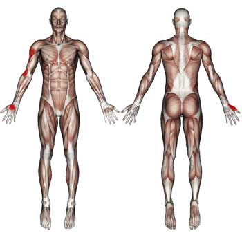 Brachialis Muscle: Arm, Elbow, Thumb Pain