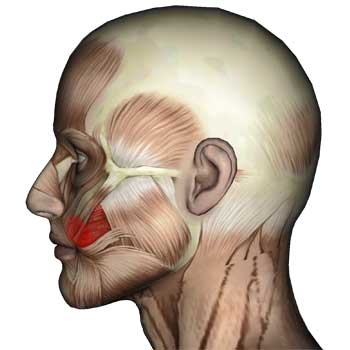 Buccinator Muscle: Cheek, Mouth Teeth Pain