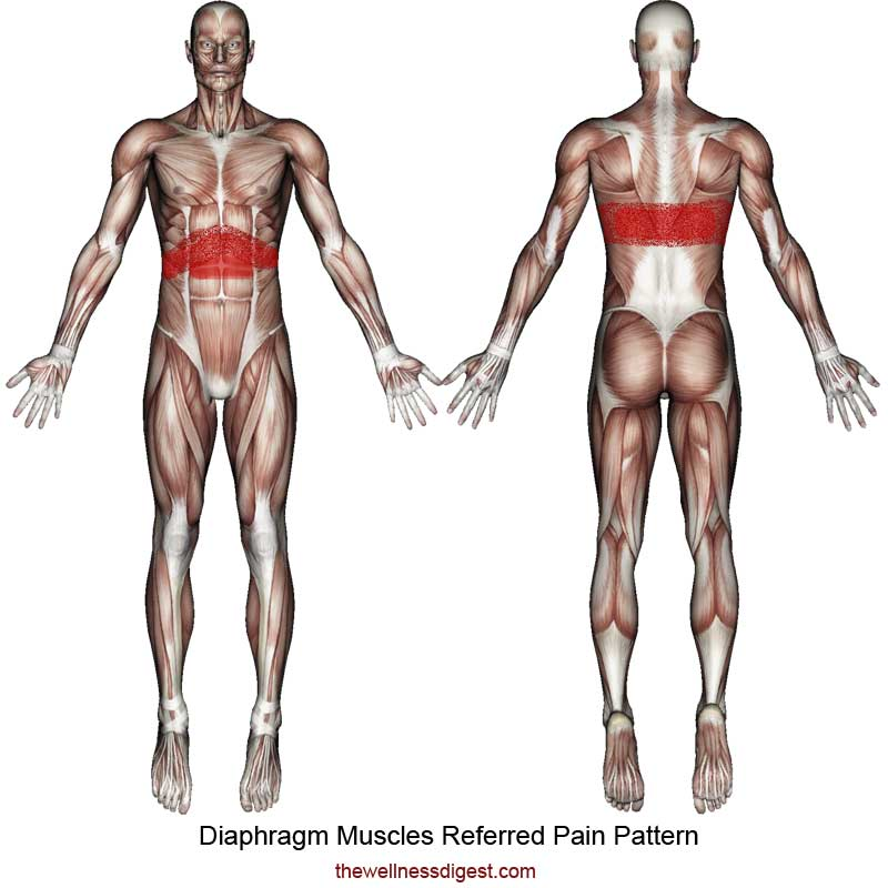 Diaphragm Referred Muscle Pain