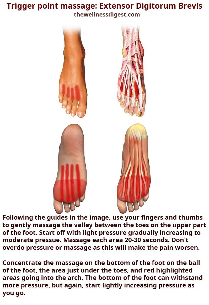 Extensor Digitorum Brevis Massage
