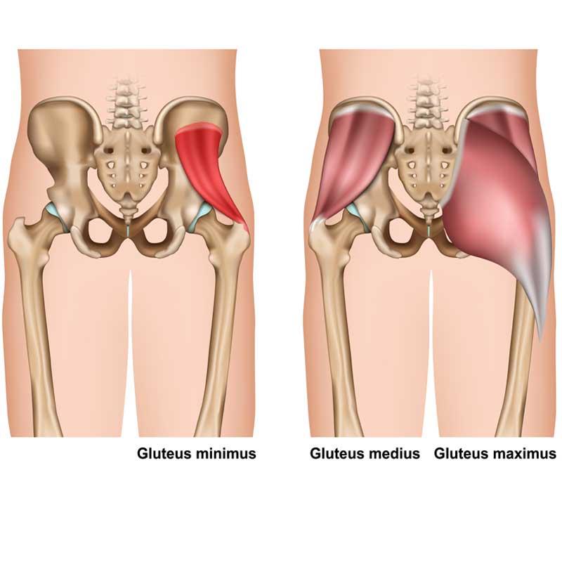Gluteus Minimus Anatomy