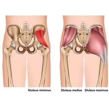 Gluteus Minimus Anatomy: Origin, Insertion, Action, Innervation