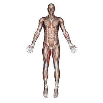 Gracilis Muscle: Constant Burning Pain In The Inside Of The Thigh