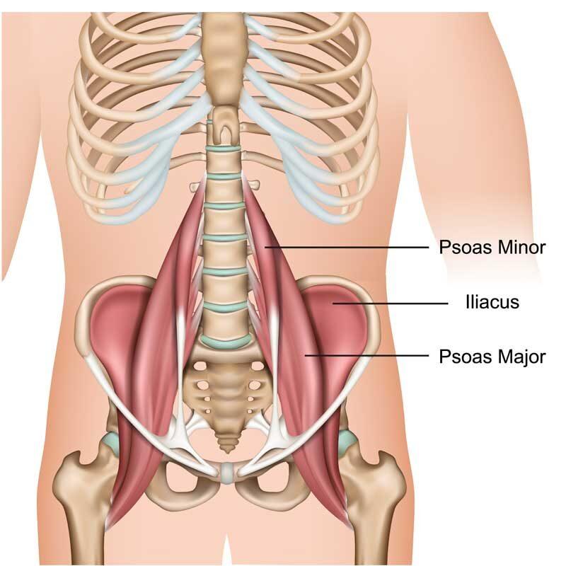 Iliopsoas Muscle Anatomy