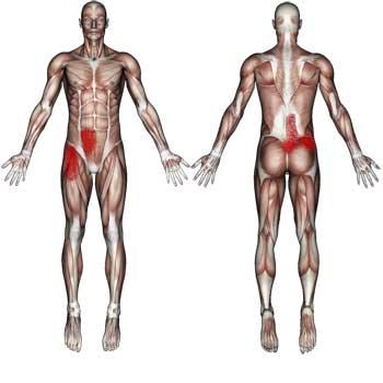 Iliospsoas Muscles