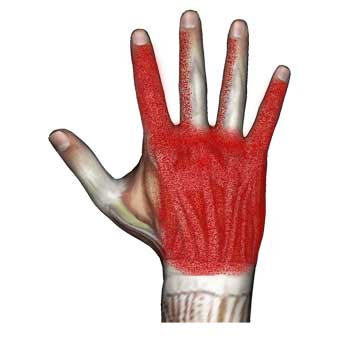 Lumbrical Muscles of Hand: Hand and Finger Pain