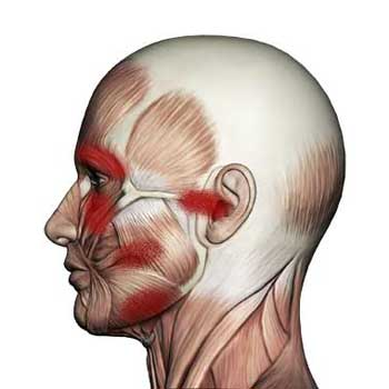 Masseter Muscle: Jaw, Eye, Ear, Pain, Sensitive Teeth