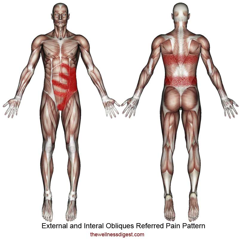 Oblique Muscle Referred Pain Pattern