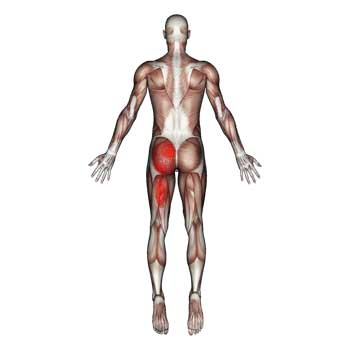 Piriformis Muscle: Low Back, Hip, Buttock, Pelvic, Thigh Pain