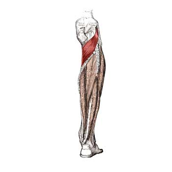 Popliteus Muscle Origin, Insertion, Action and Innervation