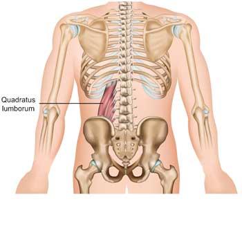 Quadratus Lumborum Anatomy: Origin, Insertion, Action, Innervation