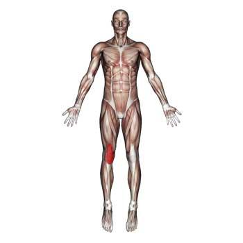 Rectus Femoris Muscle: Thigh, Knee Pain