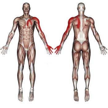 Scalene Muscles: Neck, Shoulder, Chest, Upper Back, Arm, Pain