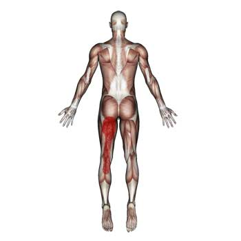 Semitendinosus Muscle: Buttock, Thigh, Knee, Calf Pain