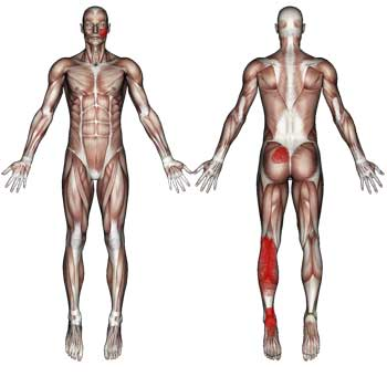 Soleus Muscle: Heel, Ankle, Calf, Knee, Low Back Pain