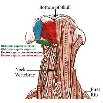 Suboccipital Anatomy: Rectus Capitis Posterior Major and Minor, Obliquus Capitis Superior and Inferior