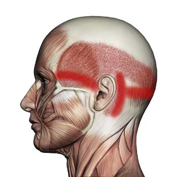 Suboccipital Muscles: Headaches, Migraines, Eye Pain