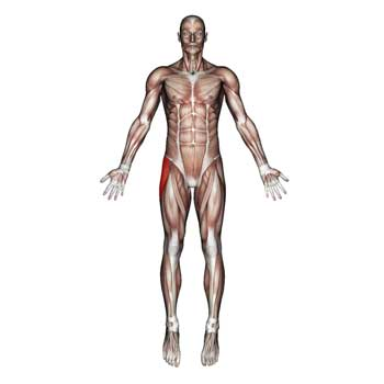 Tensor Fasciae Latae Muscle: Hip and Upper Thigh Pain, Hip Stiffness