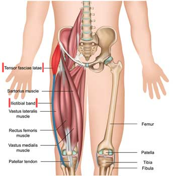 Tensor Fasciae Latae: Origin, Insertion, Action, Innervation
