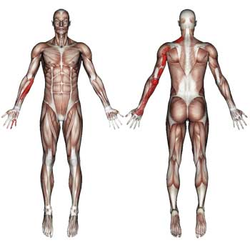 Triceps Brachii Muscle: Shoulder, Arm, Elbow, Hand Pain