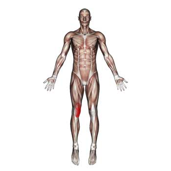 Vastus Medialis Muscle: Quadriceps Thigh and Knee Pain