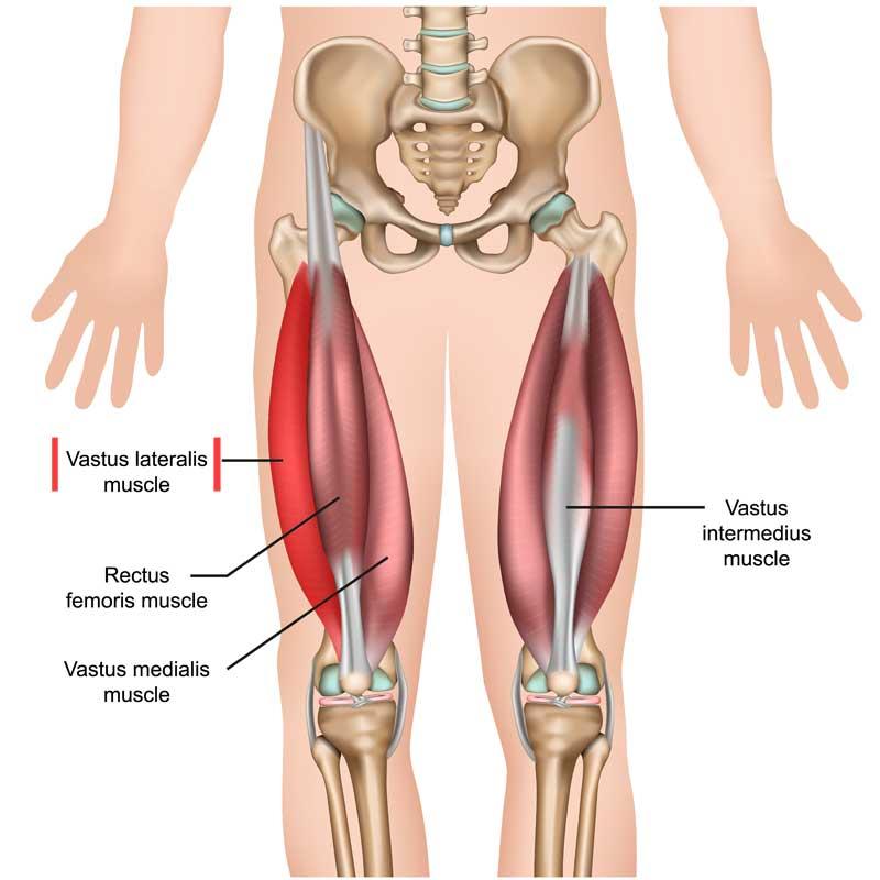 Vastus Lateralis Anatomy